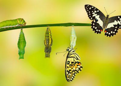 Story of Transformation (Liciana) with Joe Dispenza Method
